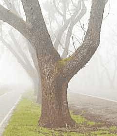 Как вы отделили бы дерево?