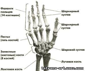 запястье фото руки